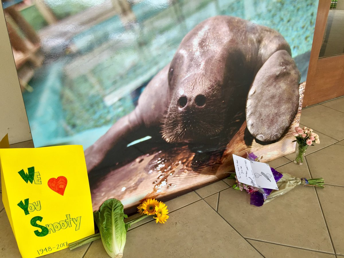 Snooty The Manatee Dies, And A Florida Community Mourns
