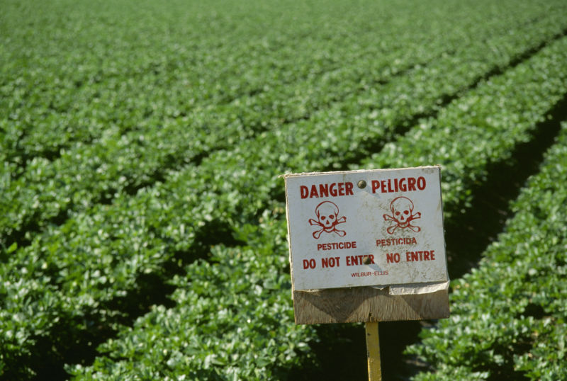 Pruitt chooses not to ban pesticide after scientists find neurotoxicity