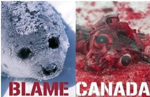Canada's Seal Hunt Is Cruel